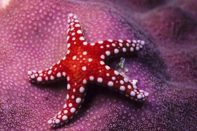 Gambar Nama Nama Hewan Dalam Bahasa Inggris Dan Gambarnya Starfish