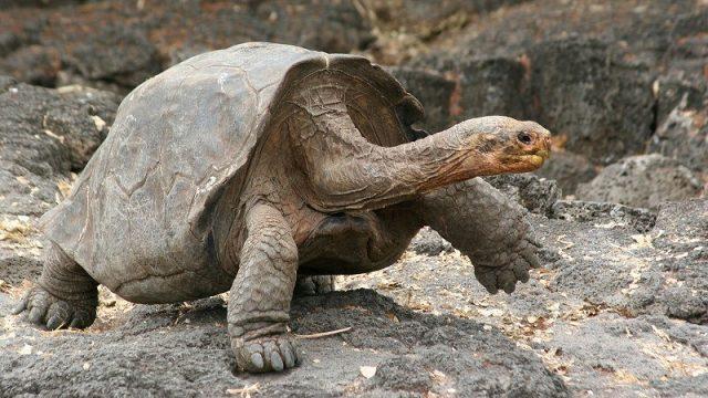 Gambar Nama Nama Hewan Dalam Bahasa Inggris Dan Gambarnya Tortoise