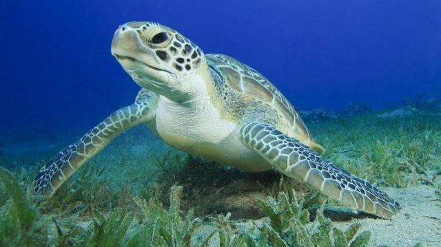 Gambar Nama Nama Hewan Dalam Bahasa Inggris Dan Gambarnya Turtle