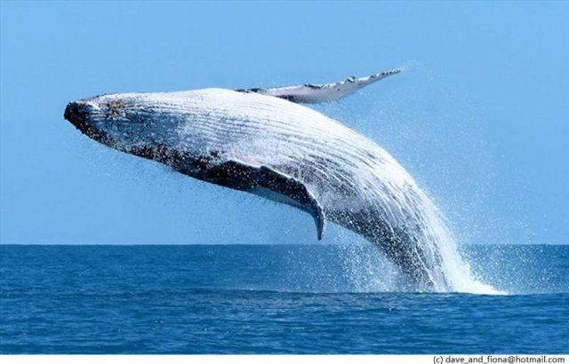Gambar Nama Nama Hewan Dalam Bahasa Inggris Dan Gambarnya Whale