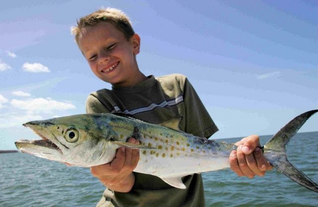 Gambar Ikan Laut Dangkal-ikan Spanish mackerel