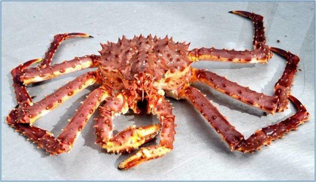 Gambar Nama Hewan Dari Huruf K - King Crab