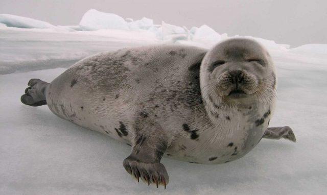 Gambar Seal Nama Hewan Dari Huruf S