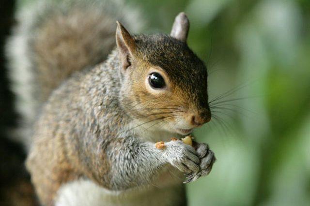 Gambar Squirrel Nama Hewan Dari Huruf S
