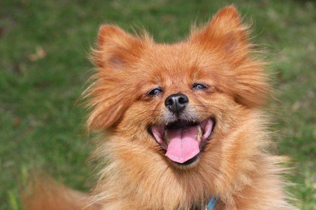 Gambar Daftar Nama Hewan Mamalia Anjing