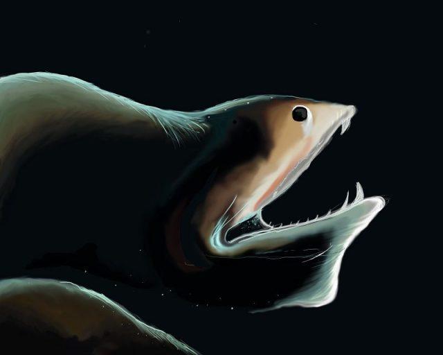 Gambar Ikan Di Lautan Dalam Gulper Eel