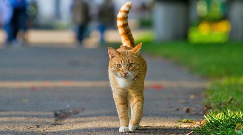 Gambar Cara Menjinakan Kucing Liar