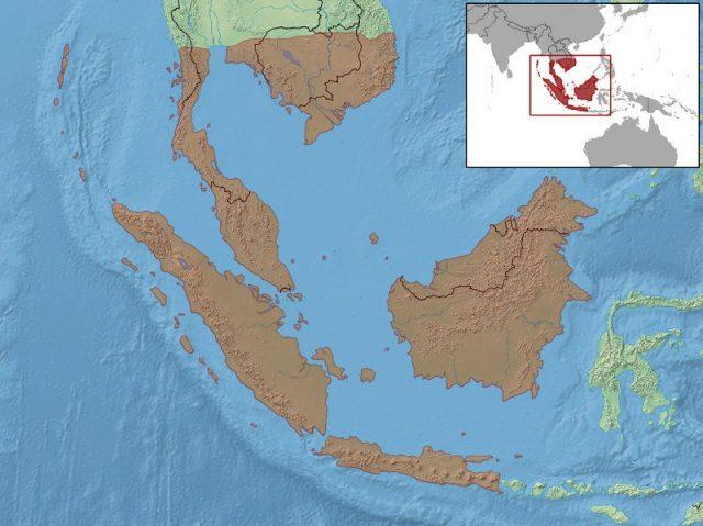 Gambar Peta Persebaran Kadal Hijau Pohon