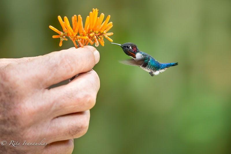 Gambar Jenis Burung Kecil Di Dunia