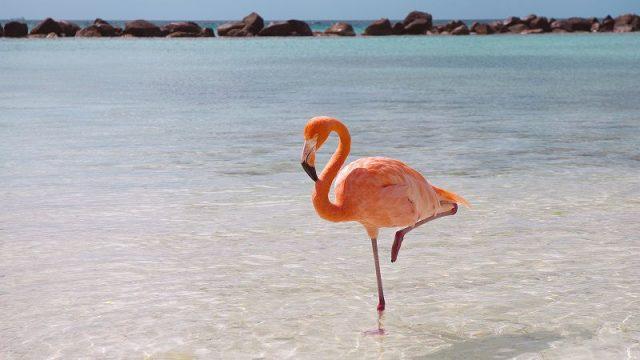 Gambar Flamingo Burung Termahal Di Dunia