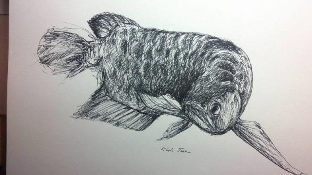 Gambar Ikan Arwana Golden Red - sketsa gambar ikan arwana