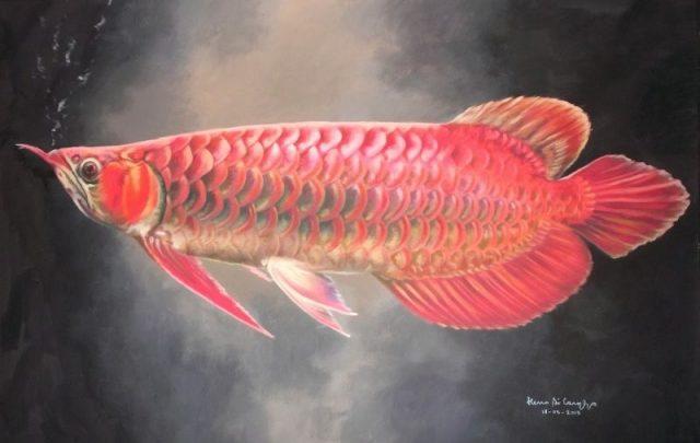 Gambar Ikan Arwana - Pesona Arowana super red I
