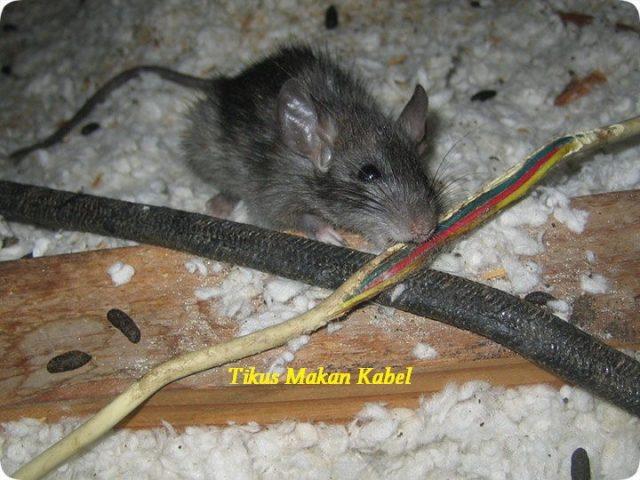 Gambar Kantong Teh Bisa Mengusir Tikus