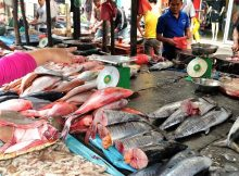 Gambar Harga ikan laut konsumsi per kg 2018