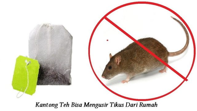 Gambar Kantong Teh Bisa Mengusir Tikus Dari Rumah