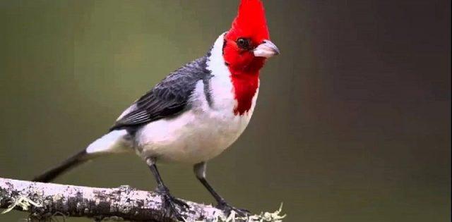 Gambar Nama Latin Hewan Burung