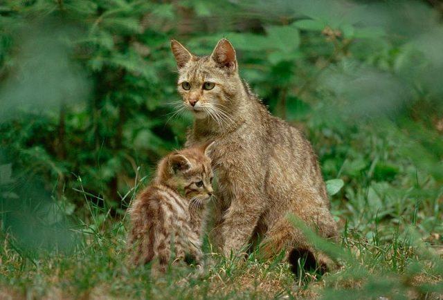 Habitat Kucing liar