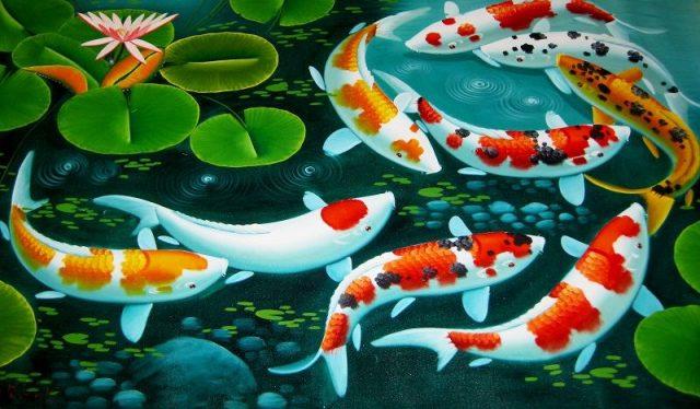 gambar animasi ikan koi bergerak