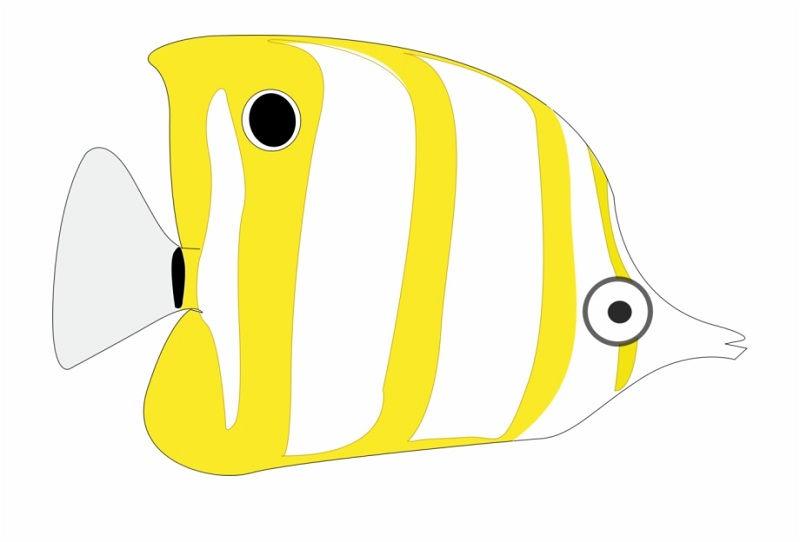 Gambar Kartun Ikan-Ikan Yang Ingin Kamu Lihat | Nama-Nama