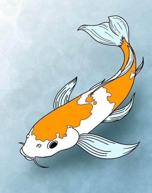 gambar karikatur ikan koi