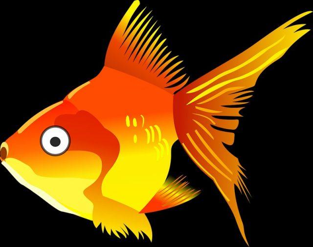 gambar kartun ikan mas