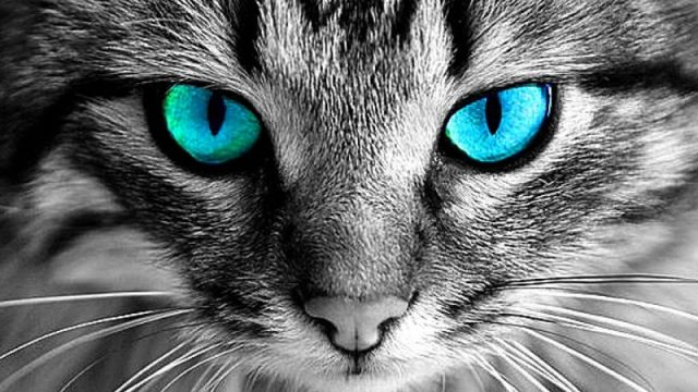Gambar Mata Kucing