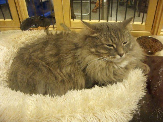 Habitat Kucing Peliharaan