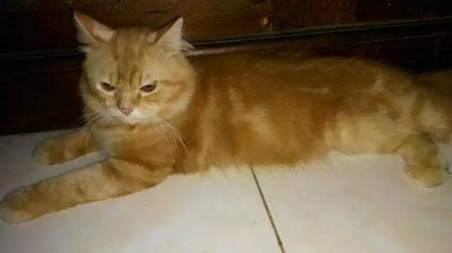 Makanan Kucing Persia medium
